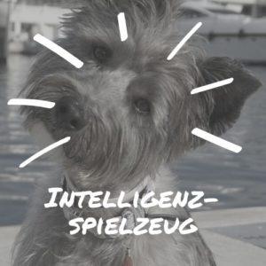 Intelligenzspielzeug